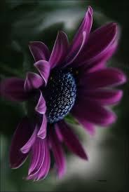 Girls Favourite Flowers - best 25 flower photography ideas on pinterest spring
