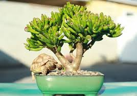 plants for office desk understanding how plants eliminate protein folding could help with
