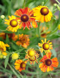 Long Blooming Annual Flowers - 25 top easy care plants for midwest gardens midwest living