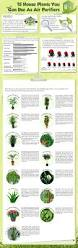 Types Of Indoor Plants 15 Air Purifying House Plants Variegated Spider Plant Easy To