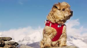 my curli curli dog harnesses and dog safety lights designer dog harnesses