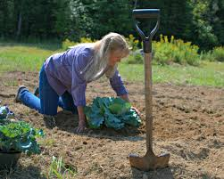 11 tips for the best vegetable garden ever fresh eggs daily