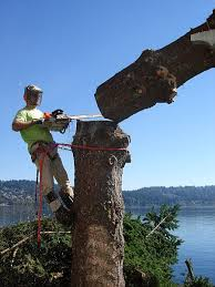 jd tree service company residential and commercial tree removal