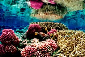 Coral Reefs Of The World Map by Coral Reefs Location Formation And Significance Worldatlas Com