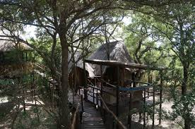pezulu tree house lodge to gomo gomo game lodge raising flowers