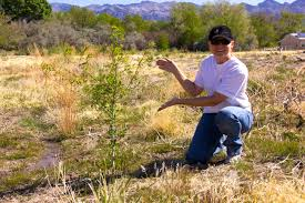 native nevada plants planting at the desert refuge 2 friends of nevada wilderness