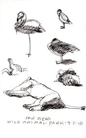 fast sketching u201d at the san diego wild animal park and the zoo and