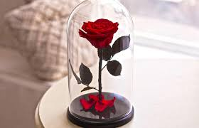 beauty and the beast rose live forever rose in glass bella rose