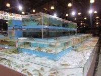 fish tank bed frame