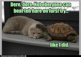 Tortoise Meme - lolcats tortoise and the hare lol at funny cat memes funny cat