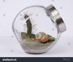 bottle terrarium cactus plant green house stock photo 470617373