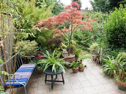 page 2 add garden drama with an ornamental tree hgtv abronda