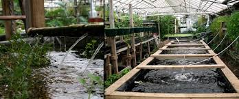 backyard fish farming ct outdoor