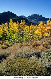 fall colors virginia stock photos u0026 fall colors