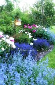 blue garden plants uk eryngium big blue just one of the more