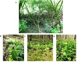 native plant salvage foundation forests free full text short term response of native flora to