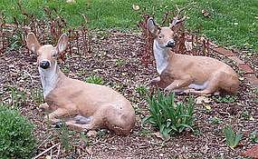 pair of deer garden statues in painted cast concrete item 778103