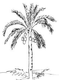 sketches for sketch drawings of palm trees www sketchesxo com