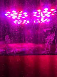 best led refugium light refugium light for chaeto reef central online community