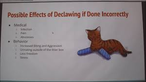 declawing in cats pros cons youtube declawing in cats pros cons
