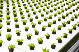 indoor farming startup bowery raises 7 5 million from investors