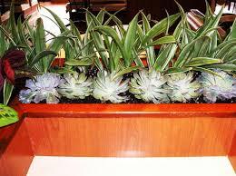Modern Indoor Planters Modern Indoor Planters Marissa Kay Home Ideas Top Indoor