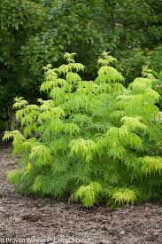 Backyard Trees Landscaping Ideas by 62 Best Central Oregon Plant U0026 Tree Ideas Images On Pinterest
