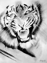 tiger sketch by shirocko on deviantart