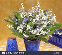 of the valley bouquet bouquet with of the valley and forget me not stock photo