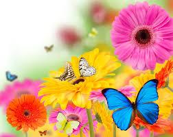 Image Of Spring Flowers by Beautiful Spring Flowers Wallpapers Wallpapersafari