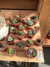 terracotta pots succulents plant u2022workshop