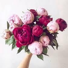 Peony Flower Best 25 Peony Colors Ideas On Pinterest Peony Red Peonies And