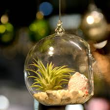 hanging glass air plant terrarium with a figure by dingading