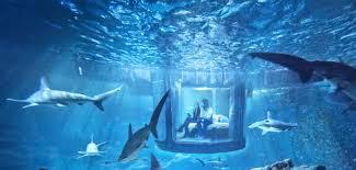 chambre aquarium le bon plan airbnb une chambre au milieu des requins à l aquarium
