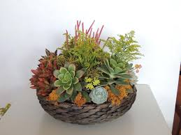 succulent arrangements succulent arrangement san diego only succulents