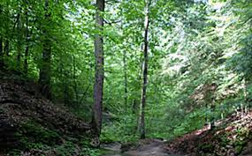 Indiana forest images More than a half million acres of indiana forests certified greenbiz jpg
