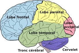 si e des motions dans le cerveau décodage d expériences visuelles depuis le cerveau humain wikipédia