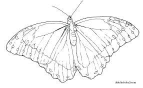 coloring pictures of small butterflies coloring pictures of butterflies s s coloring pictures of small