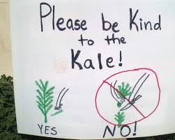 kale 101 basic care and harvesting tips our green thumb community