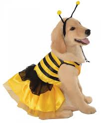 Baby Bee Halloween Costume Baby Bumblebee Pet Costume Family Friendly Costumes Fer