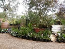 native plant nursery victoria bendigo tourism goldfields revegetation native nursery