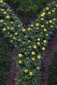child u0027s alphabet garden u2013 abc garden ideas for kids