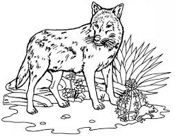 25 best wolf coloring pages images on pinterest draw