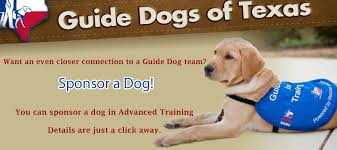 Sponsor A Puppy For The Blind Guide Dogs Of Texas