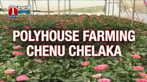polyhouse farming business plan agricultural awareness programme