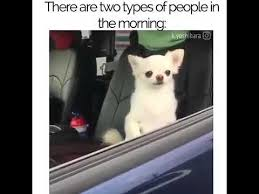 Morning People Meme - there are two types of people in the morning lazy dogg chihuahua