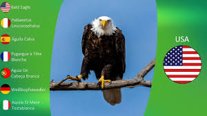 50 state birds of usa youtube