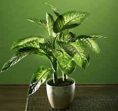 plants that don t need sunlight to grow 100 houseplants that don t need light growing rosemary