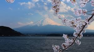 volcano flowers tsvetenie tag wallpapers forest mountains fuji