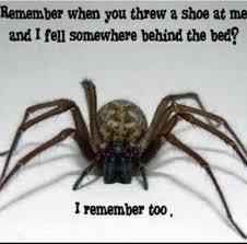 Spider Meme Misunderstood Spider Meme - misunderstood spider image gallery spider 100 images pretty